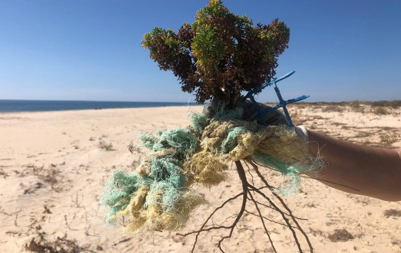 marine plastic with a small branch of a tree